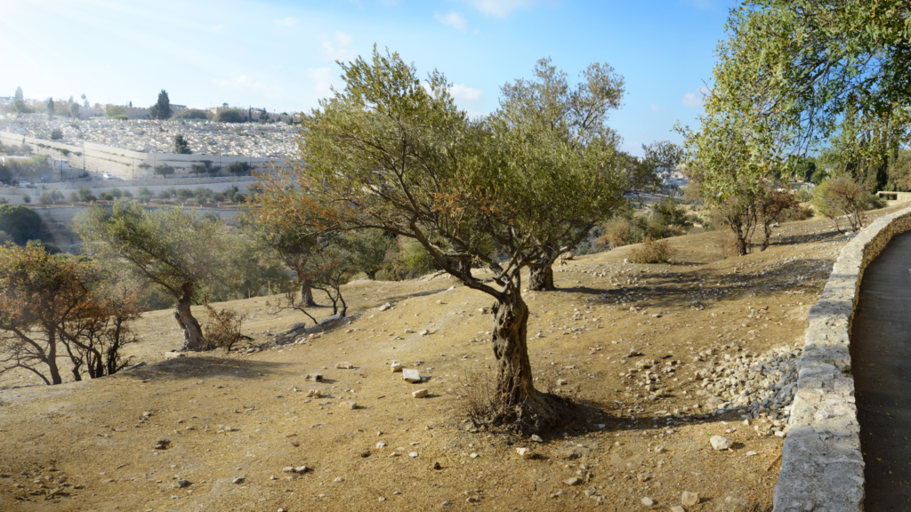 picture-of-mount-of-olives-in-jerusalem